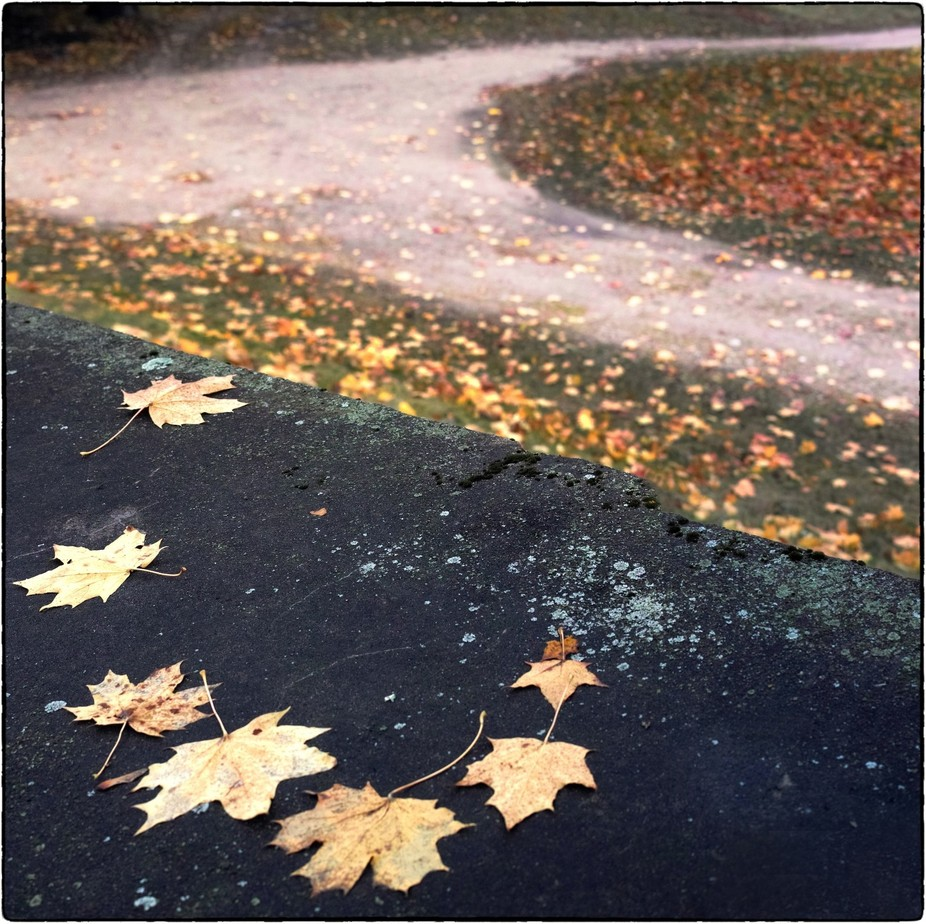 The autumn turn