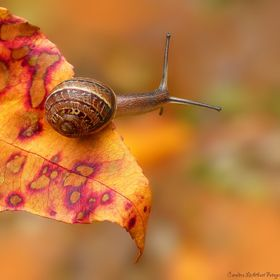 A little courageous snail sliding forward into an unknown world...