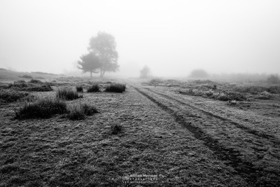 Frosty Autumn Path