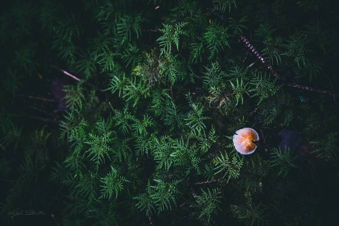 Little things by yuliastarostina - Mushrooms Photo Contest