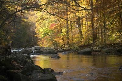 True Autumn Beauty
