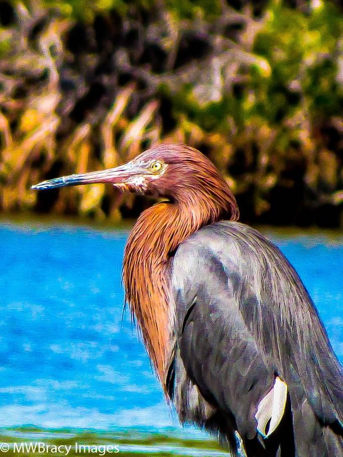Floating the estuary near San Carlos, Mx. is a birders paradise.