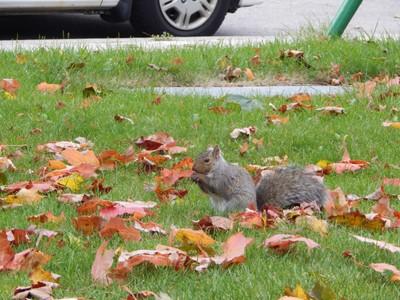 Squirrel. Friend of mine. Scarborough. Toronto.  ©CANTARA WALI