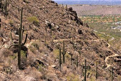 IMG_6527 (3), Pole Line Trail, Sabino Canyon Arizona, May 2014