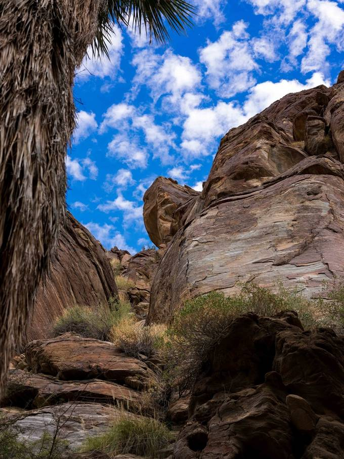Images from my hike in Indian Canyons, Palm Springs Ca.