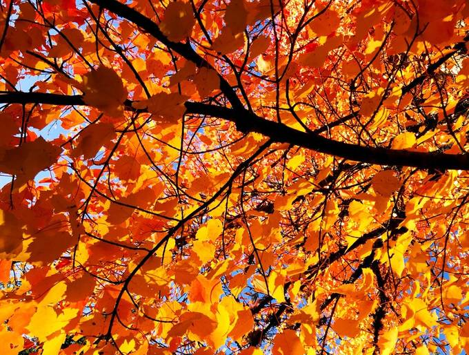 Autumn leaves: all dressed up and...