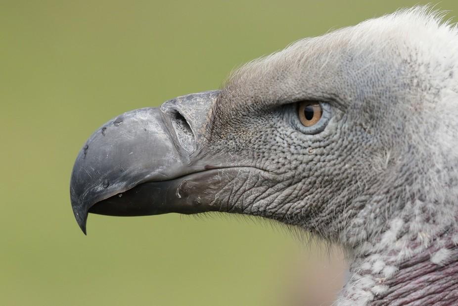 Eagle Encounters, Spier, Stellenbosch