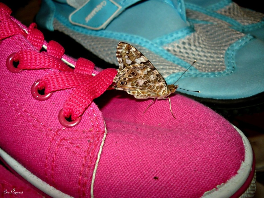 Butterfly on a pink shoe