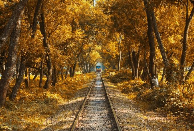 The train    by topusaha - Image Of The Month Photo Contest Vol 28