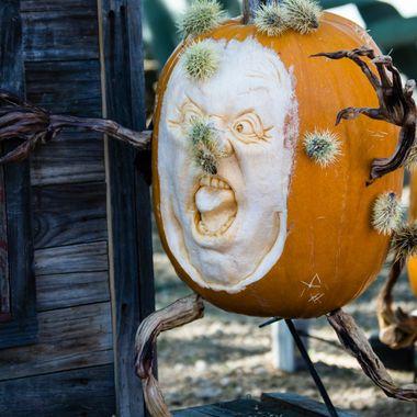 Poor pumpkin lost it's battle with a cactus.