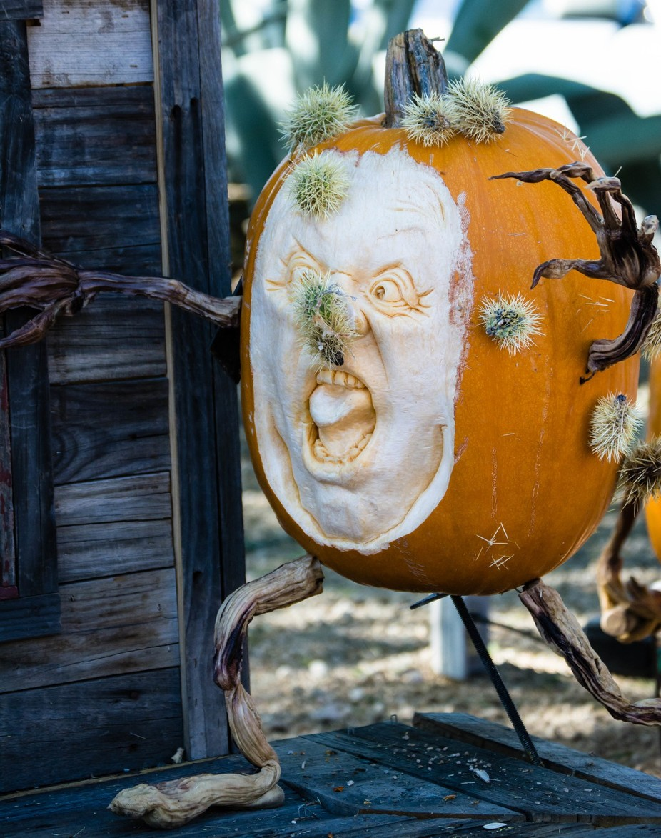Poor pumpkin lost it's battle with a cactus.