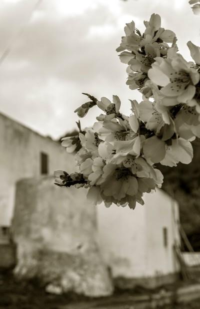 flores con arquitectura