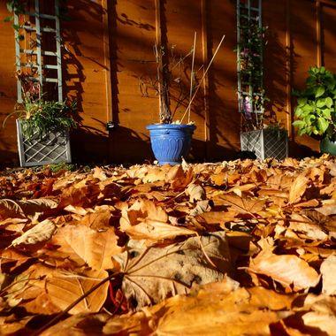 Got a new carpet today. ........colour is Autumn Gold ...... :-)