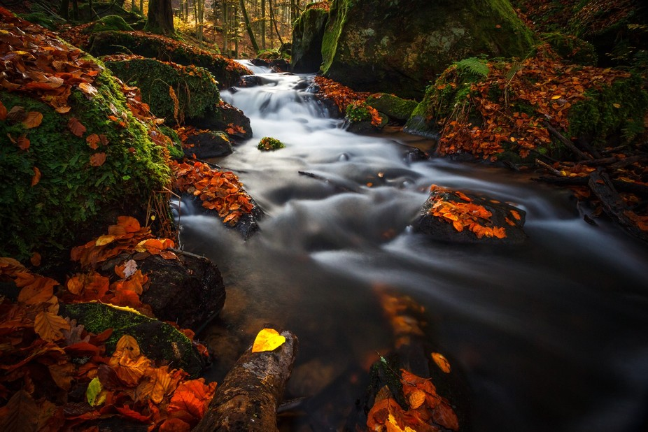 Magical 'Karlstalschlucht' in southwest Germany ist covered with fallen leaves ...