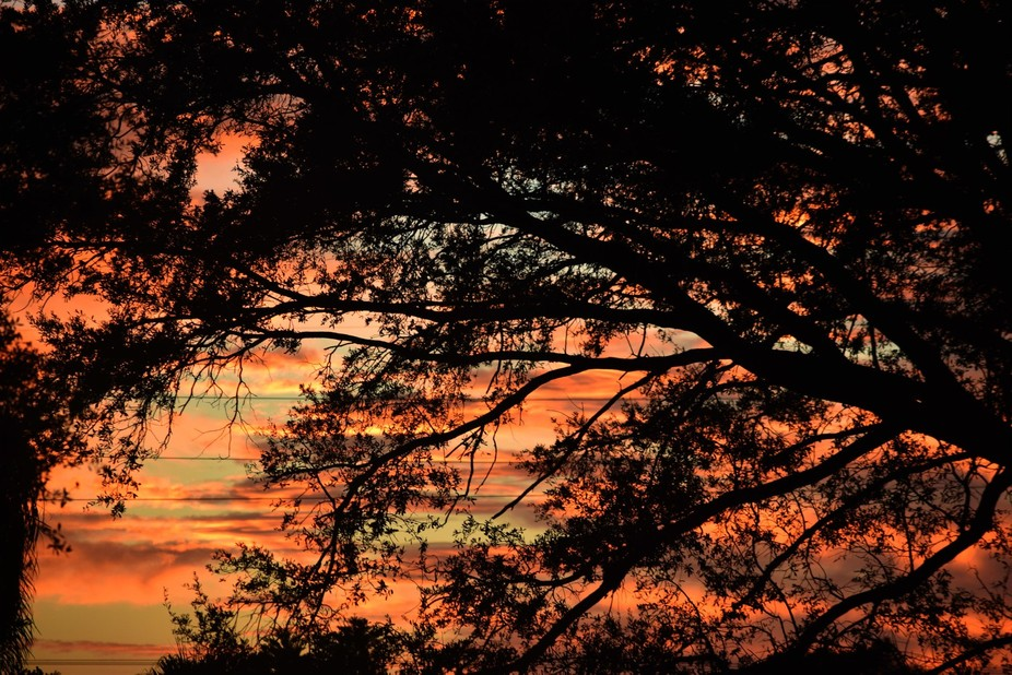Red layered sunset through the tree