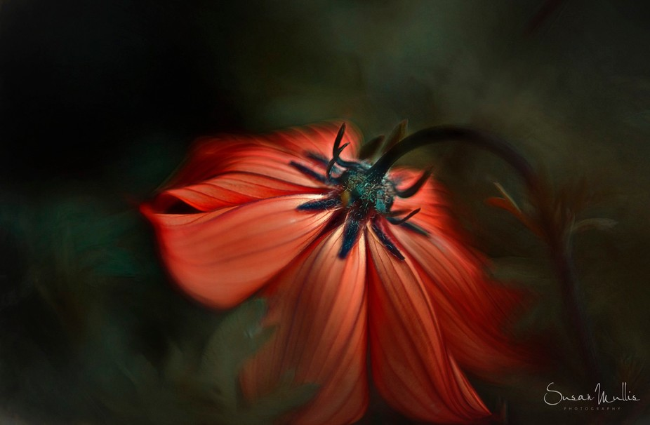 This was a freelensed image but as I took it into Photoshop for a tune up it began to take on a l...