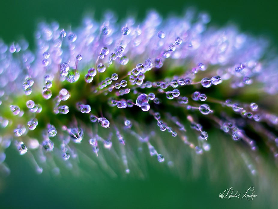Within every tiny landscape is a world all of its own.  The early morning dew collects & ...