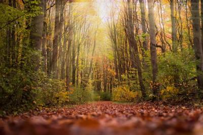 Sunlight in Lawless Park in Fall