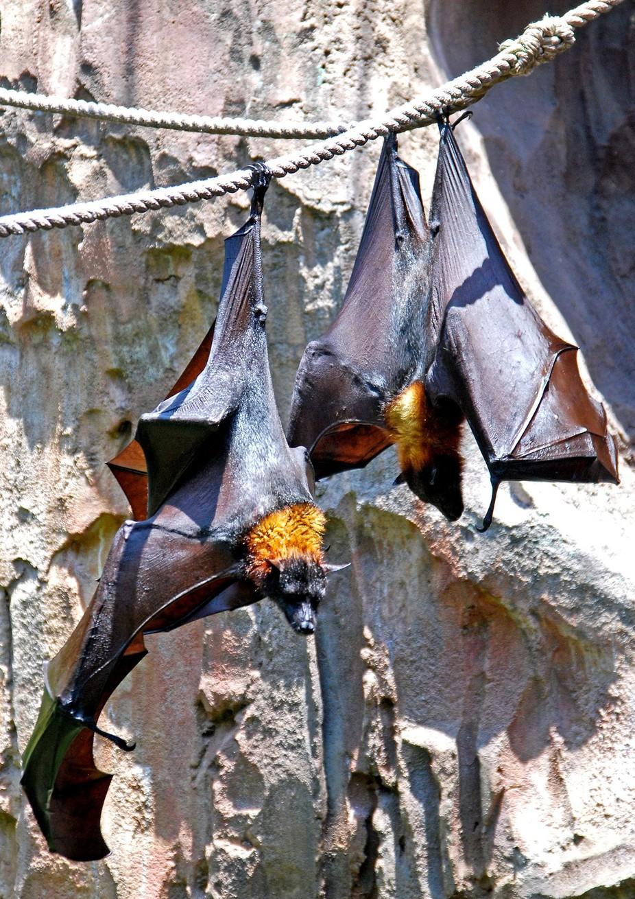 AK Bats DSC_0564
