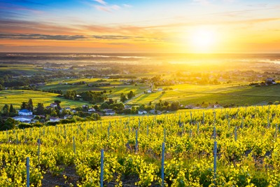 First lights of sunrise over vineyards and landscape of Beaujolais