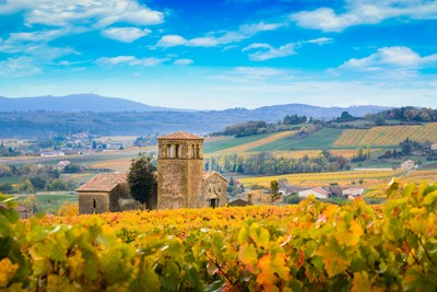 Landscape and colors of Beaujolais at fall-4
