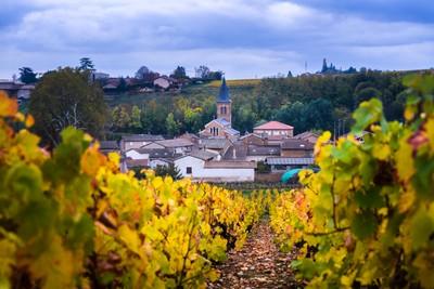 Village of Beaujolais and vineyards during fall season-2