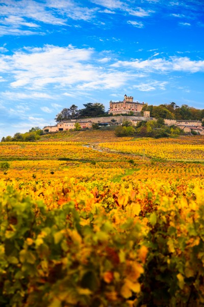 Yellow leaves and castle in Beaujolais land
