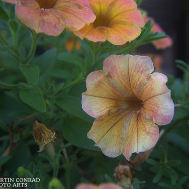 Striped and mottled flowers