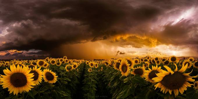 Independence Day by adrian-borda - A Storm Is Coming Photo Contest