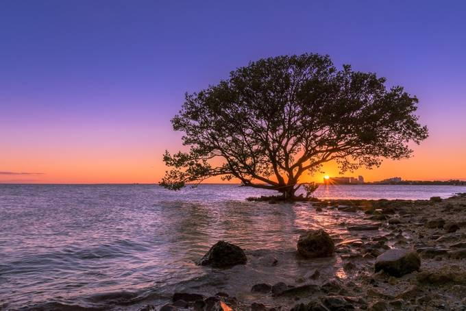 Lullaby Tree by DesiDrewPhotography - A Lonely Tree Photo Contest
