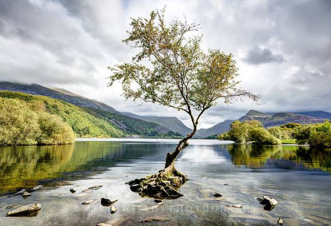 Llyn Padarn Lone Tree by MikeShields - Image Of The Month Photo Contest Vol 28