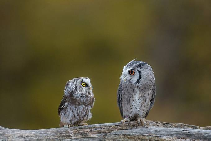 Statler and Waldorf by matthiasschotthfer - Image Of The Month Photo Contest Vol 28