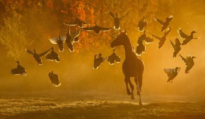 Freedom by katarzynaokrzesik - Celebrating Nature Photo Contest Vol 7
