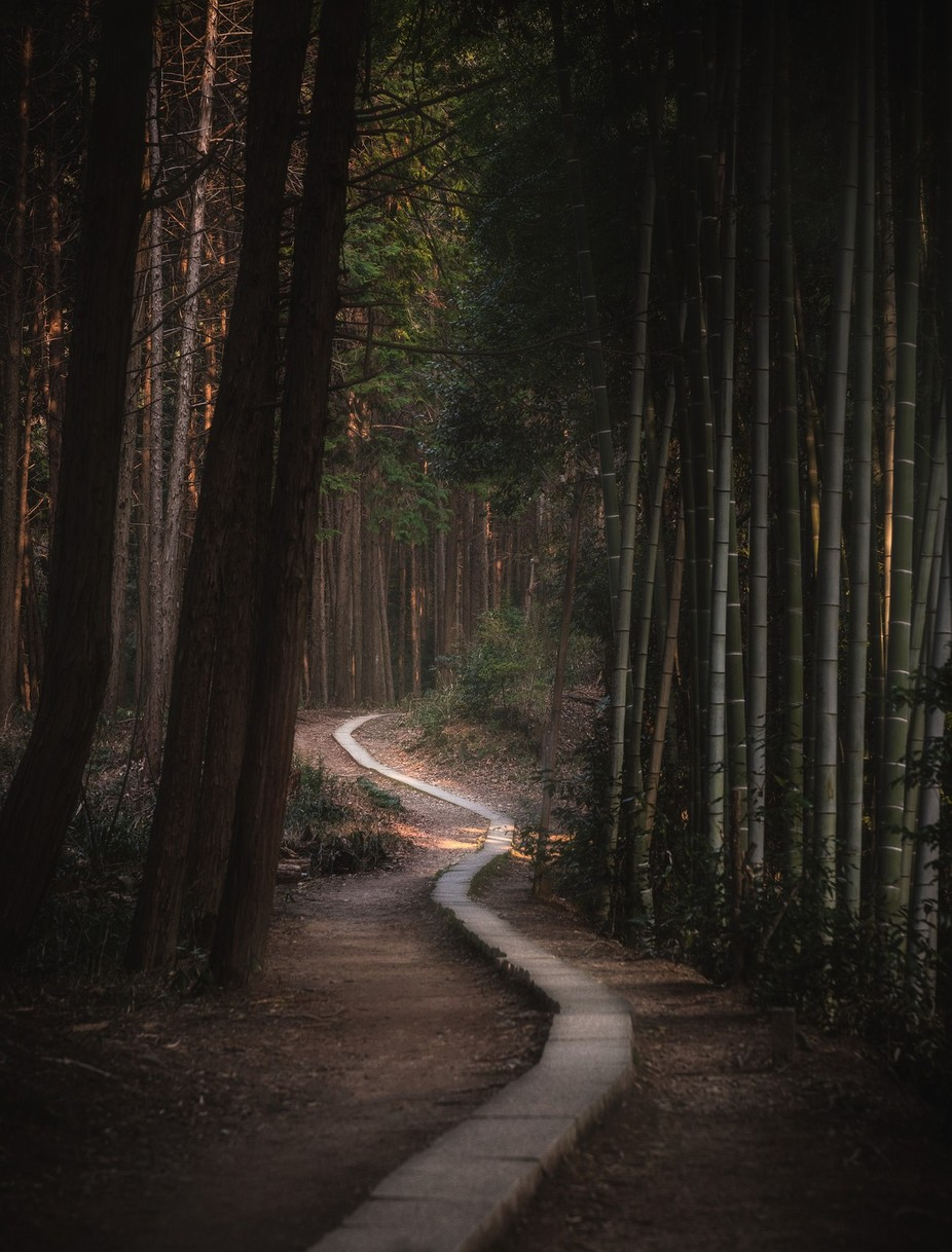 One Path Two Sides by Ecampbell7 - The Magic Of Japan Photo Contest