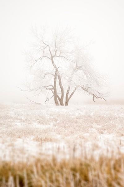 Winter Lone Tree