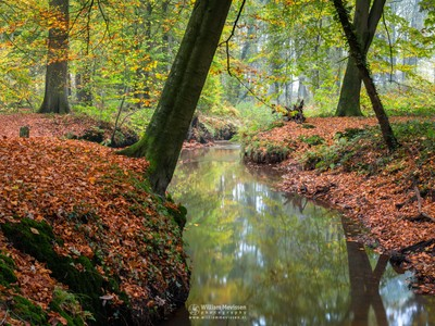 Meandering Autumn Brook