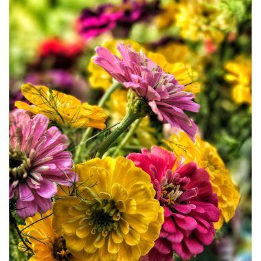 Sandras Flowers