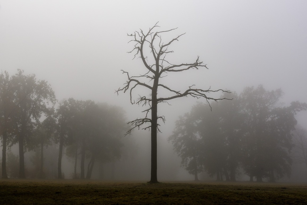 Lonesome dead tree in a park on a foggy morning-this scenery I found in my hometown this autumn