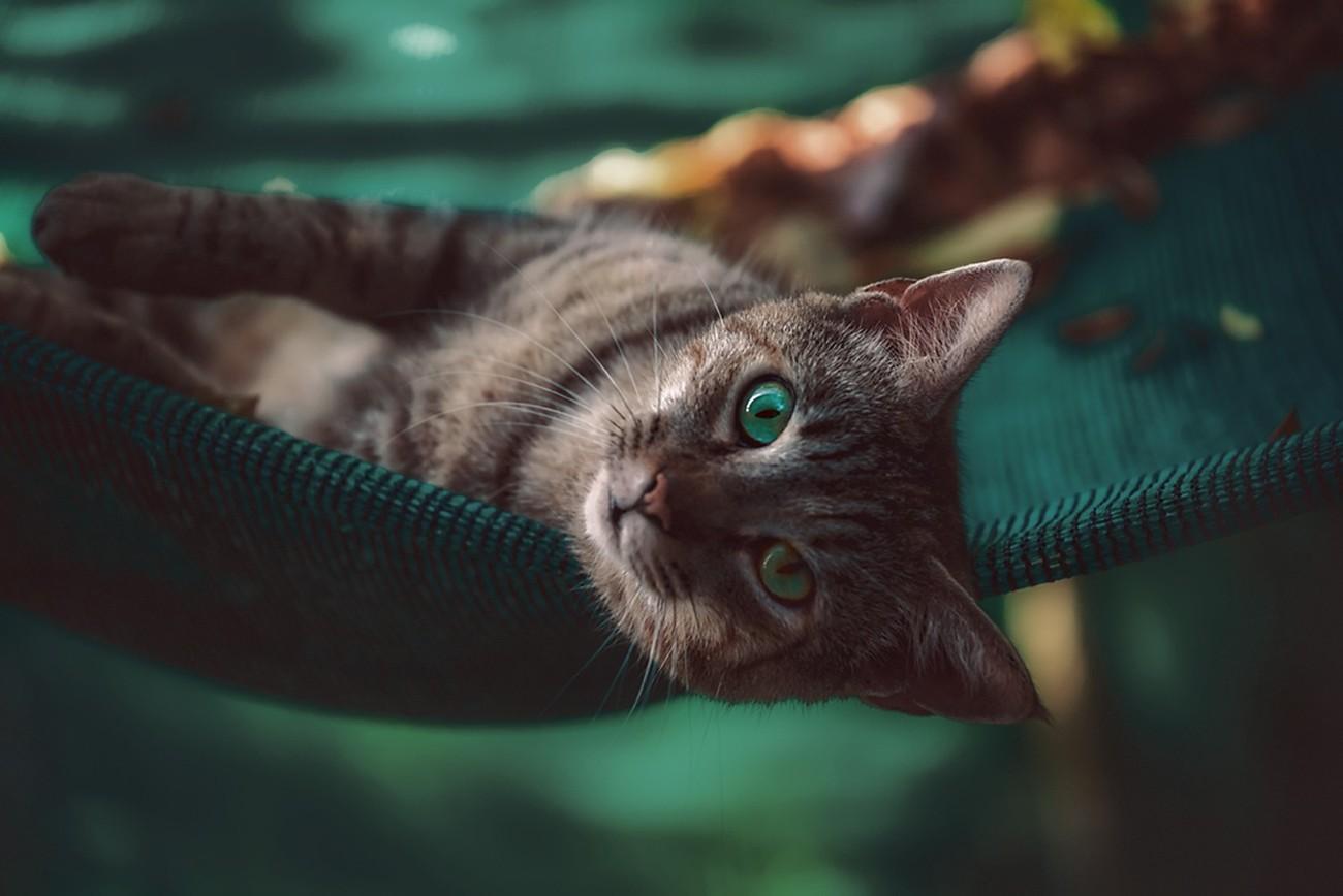 My Cute Pet Photo Contest Winners