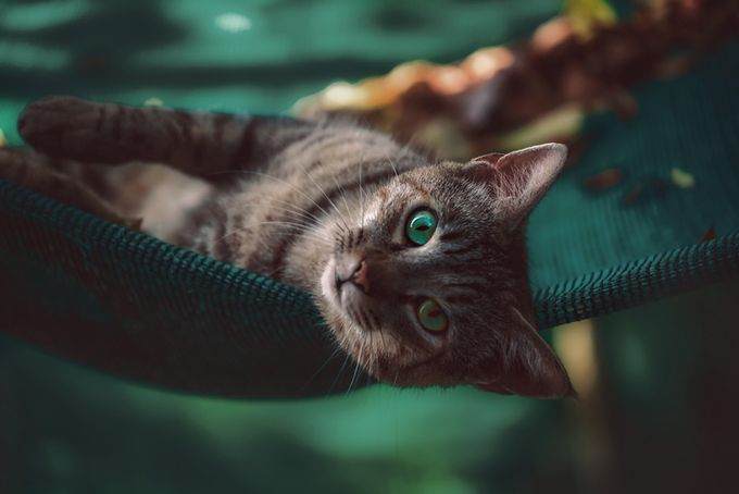 Turquoise eyes  by FloS - Green Eyes Photo Contest