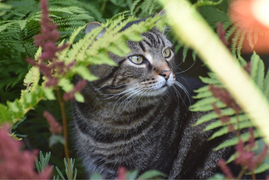 My very own jungle cat