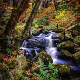 After recent rain the stream through the woods was bearing the autumn leaves as it tumbled over the rocks