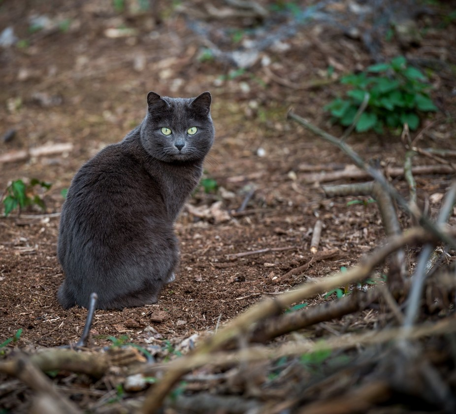 """Picture taken in my friend 's garden. The cat was """"posing"""" to take a p..."""