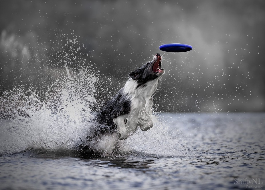 """Photo taken during workshop""""Dogs in Action"""" with Claudio Piccoli"""