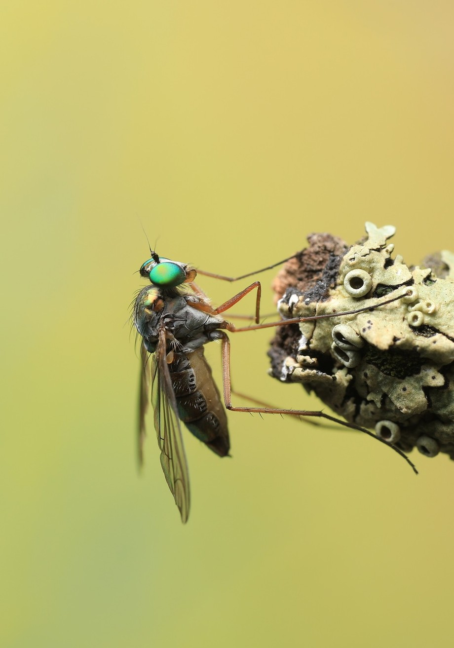 The Fly. by biglenswildlife - Green Eyes Photo Contest