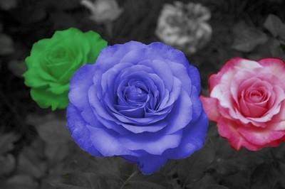 rbg_flowers_by_imashutterbug