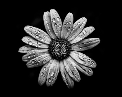 Backyard Flowers In Black And White 16