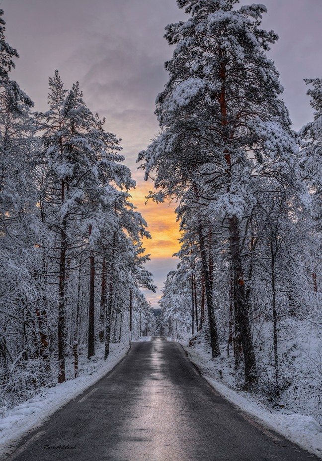 After snowfall by runeaskeland - Tall Trees Photo Contest