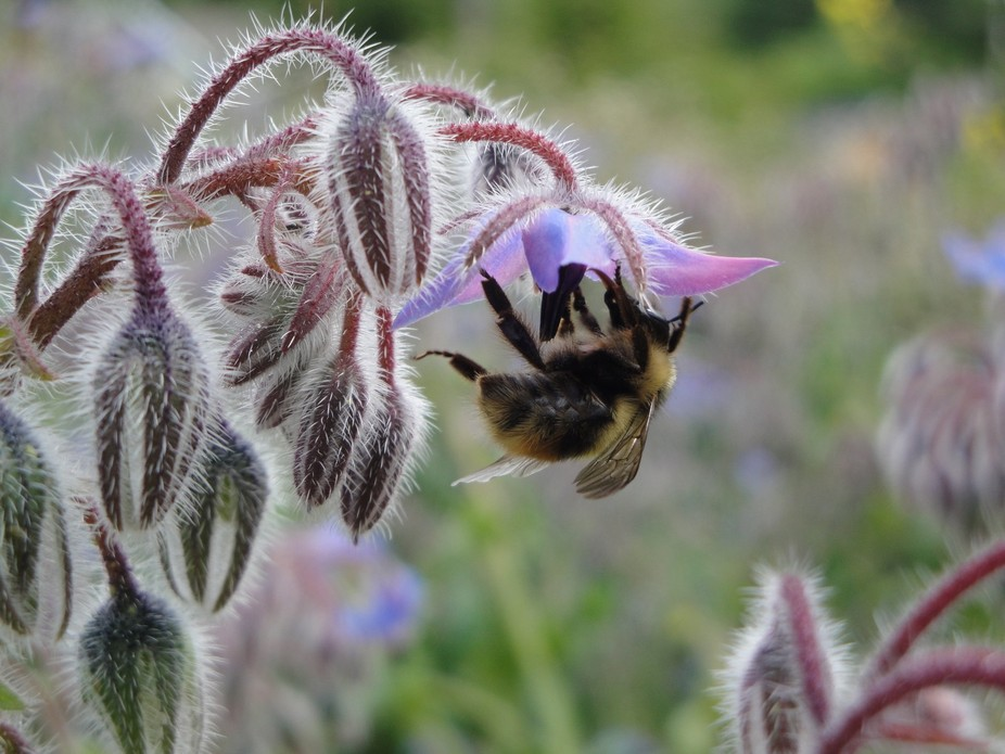 My very good friend Julie wanted a picture of a bee so I took her little camera and chased this b...