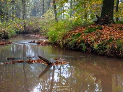Meandering Autumn Brook